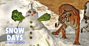 Snow-Days-Event-Page-Header