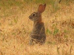bunny_0