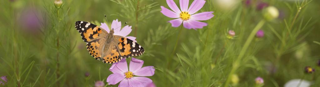 Butterfly istock_1300x356_0