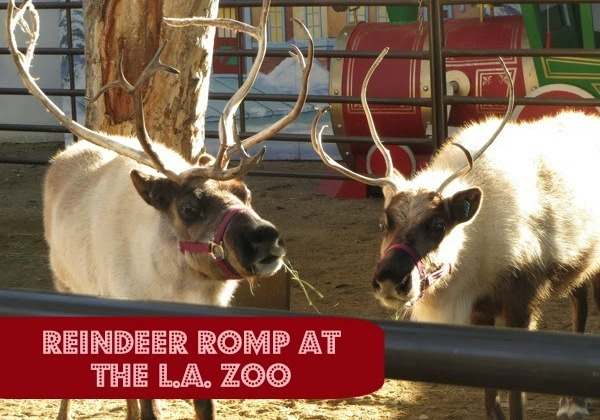 reindeer-romp-600x420